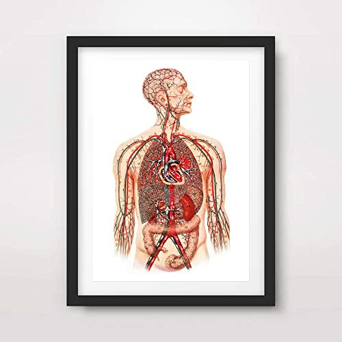 heart veins arteries body medical art print anatomical anatomy human body  biological chart diagram illustration vintage antique poster home decor  wall