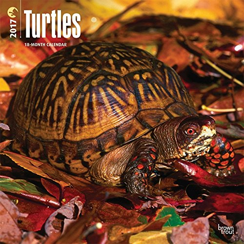 Turtles 2017 Wall Calendar