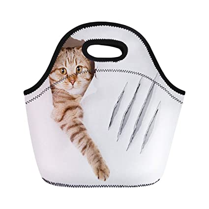 ac266ddc9007 Amazon.com: Semtomn Lunch Bags Paw Brown Scratch Funny Cat in Hole ...