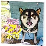 アートプリントジャパン 2020年 ワン!!めくりカレンダー/リフィル vol.017 1000109226
