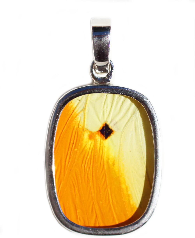 Eco Friendly Jewelry Butterfly Wing Jewelry AUTHENTIC Butterfly Wings Great Orange Tip Butterfly Wing Earrings Statement Jewelry