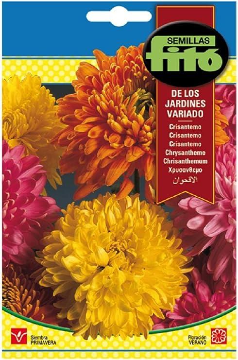 Semillas Fitó 541 - Semillas de Crisantemo de los Jardines Variados: Amazon.es: Jardín