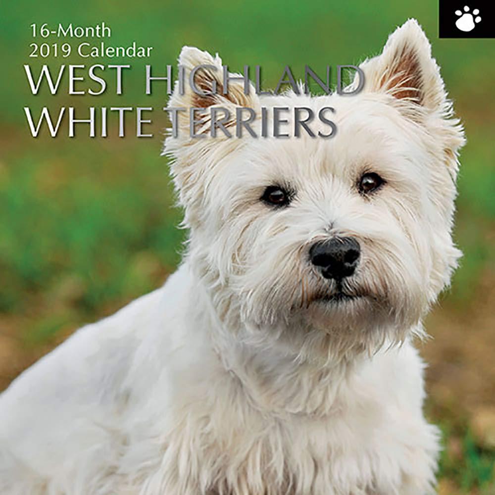 30 X 30 Cm Calendario Da Parete In Inglese 2019 West Highland White Terrier
