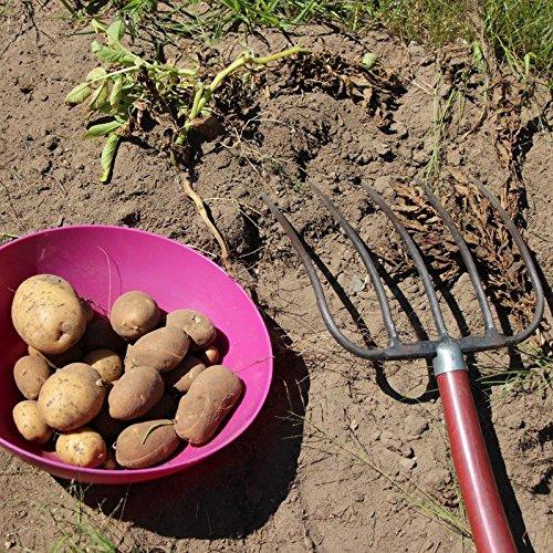 Bolly Bulbs/® First Early Pentland Javelin Seed Potatoes 15 Tubers