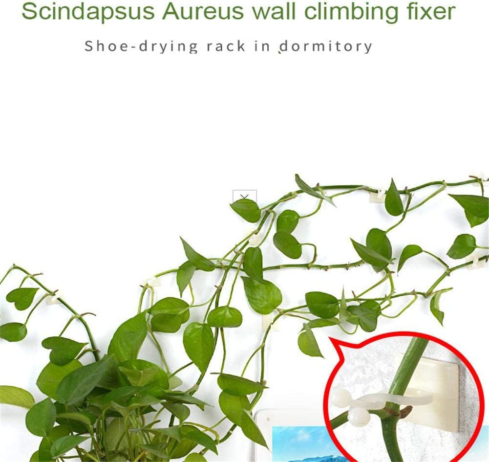 Obobb 100PCS Binding Clip Vine Plant Climbing Wall Fixer Garden Vegetable Plant Support Non-Marking Self-Adhesive Hook