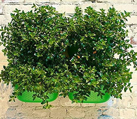 Living Wall Planters Plantador de la pared sala de estar ideal ...