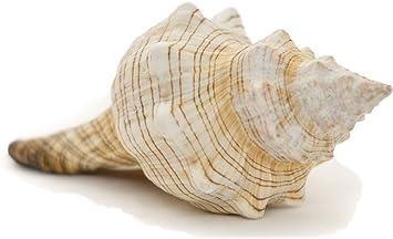 Conch Seashell sterling silver charm .925 x 1 Conches Sea Shell Shells SSLP4049