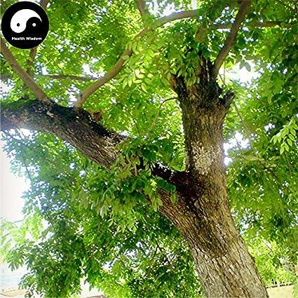 Amazon Com Buy Rare Scented Rosewood Tree Seeds 160pcs Plant