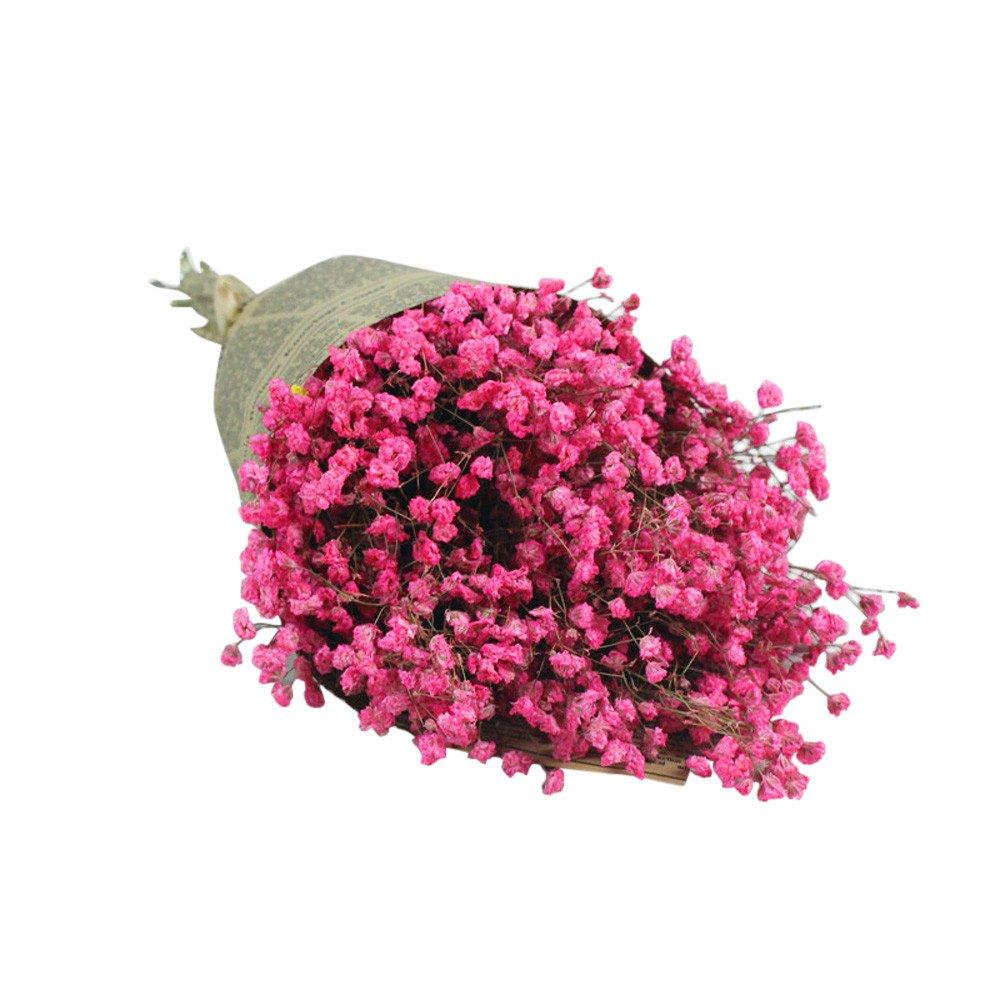 Litetao Gypsophila Natural Dried Flower Baby's Breath Home Decor Dried Flower Sky Star for Party, Wedding, Art hall, Office, Shop, Home, Garden (H)