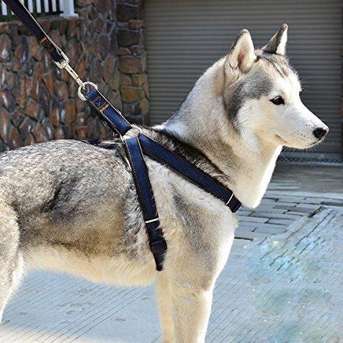 Aodoor Softgeschirr mit Leine Brustgeschirr Hunde Geschirr Sicherheitsgeschirr Denim Leine für Haustiere Hunde verstellbare(M schwarz)