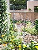 Gardener's Supply Company Two-Panel Chicken Wire Trellis