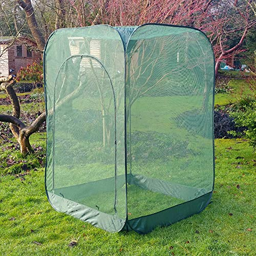 Protector de fácil montaje para frambuesas: Amazon.es: Jardín
