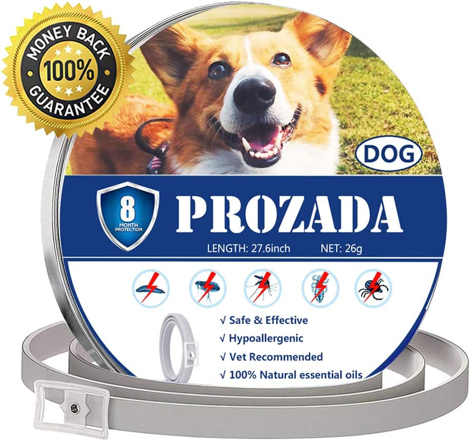 PROZADA Natural Collar Antiparasitario para Perros (8 Meses) Prevención de Pulgas y Garrapatas - con Extractos de Plantas de Aceites Esenciales - Hipoalergénico Talla única para Todos los Perros (1)