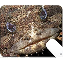Luxlady Gaming Mousepad 9.25in X 7.25in IMAGE: 20154383 Close up of a muppet like Oyster Toadfish
