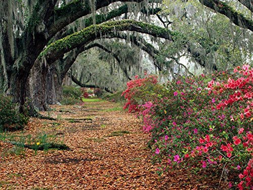 Azaleas And Live Oaks Magnolia Plantation Charleston South-Carolina -Oil Painting On Canvas Modern Wall Art Pictures For Home Decoration Wooden Framed (20X16 Inch, Framed) (Canvas Art Discount)