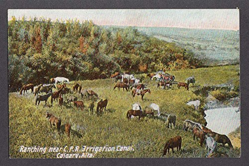 Irrigation Canal - Ranching Canadian Pacific Railway Irrigation Canal Calgary Canada postcard 1910s