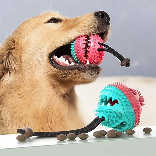 HXHH Tratar Perro Bola Dientes Comida para Perros de dispensación ...