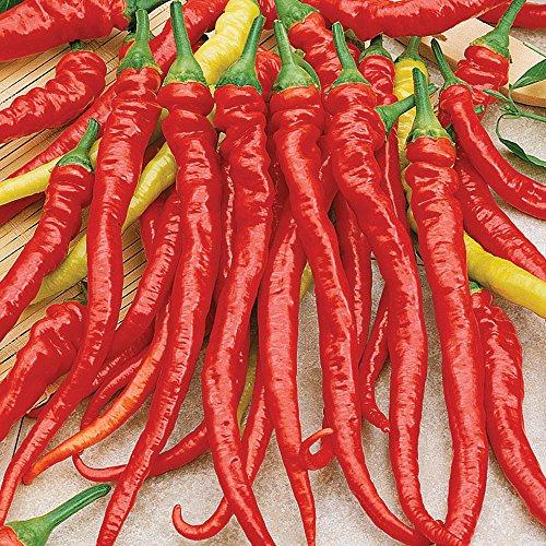 3 Inch Super Bowl - Burpee Ristra Cayenne Hybrid Hot Pepper Seeds 30 seeds