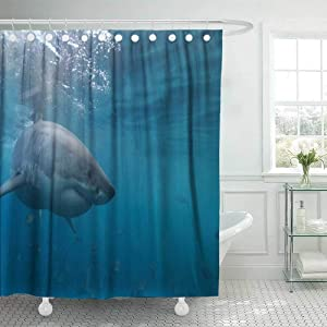 72X78 Shower Curtain,Douecish Shower Curtain Great White Shark Neptune Islands South Australia Ocean Carcharias Cool Shower Curtain with Hooks Waterproof Eco-Friendly Long Shower Curtain for Bathroom
