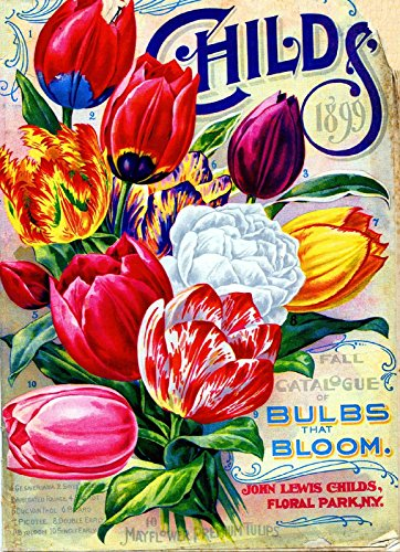 (A SLICE IN TIME 1898 Childs Tulips Vintage Flowers Seed Packet Catalogue Advertisement Poster)