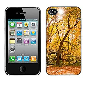 Print Motif Coque de protection Case Cover // M00154192 Fondo de otoño de la haya Branch // Apple iPhone 4 4S 4G