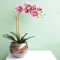 Arranjo de Orquídea Artificial Rosa no Vaso Transparente Médio   Linha Permanente Formosinha