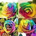 Viedoct 500 Pcs Rainbow Rose Seeds Colorful Flower Home Garden Yard Decor Petal Plants