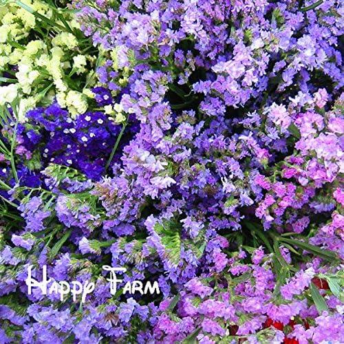 Maceta de flores Myosotis sylvatica semillas, nomeolvides semillas, plantas de maceta semillas para el hogar y el jardín, 100 semillas / bolsa: Amazon.es: Jardín