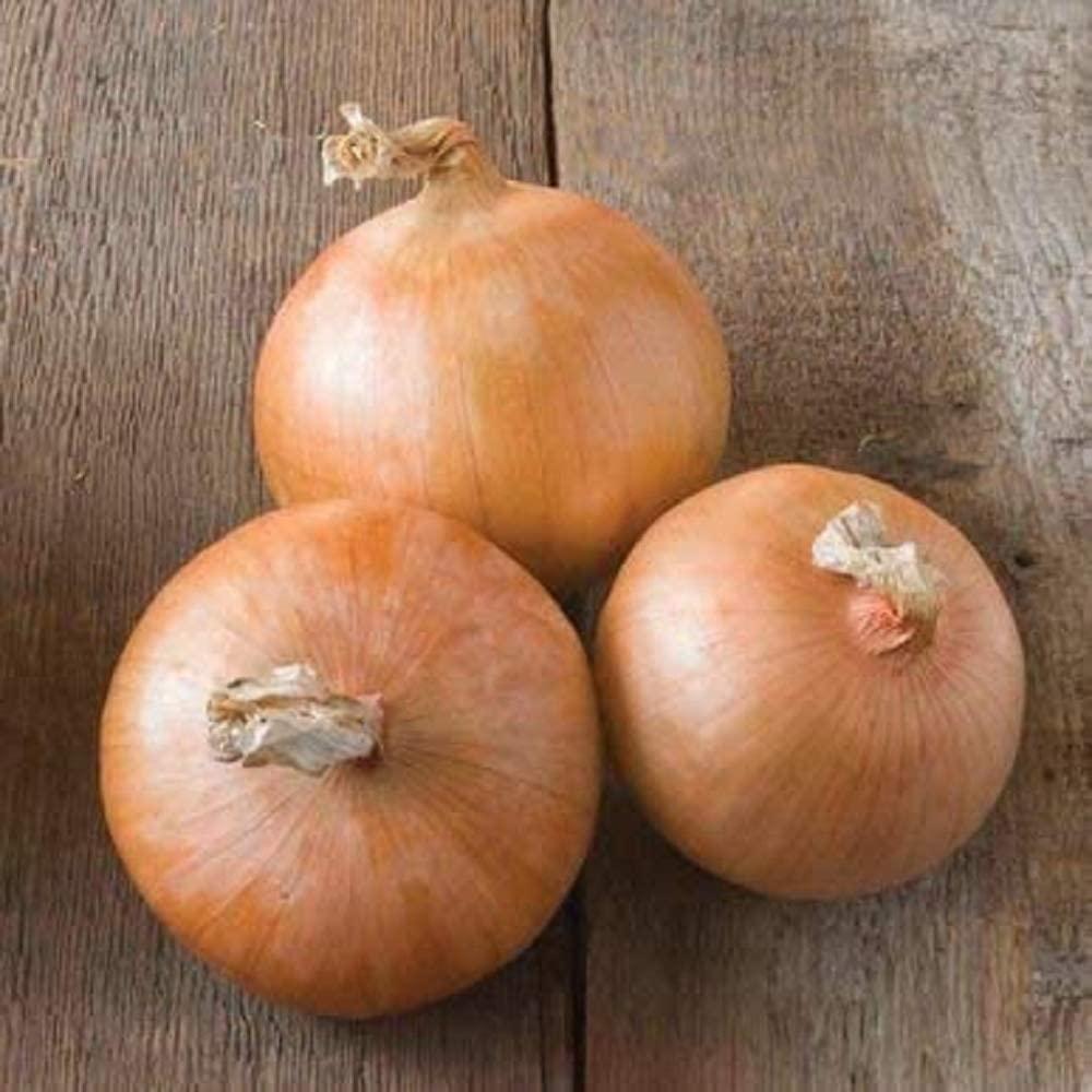 David's Garden Seeds Onion Intermediate-Day Candy 2993 (Yellow) 200 Non-GMO, Hybrid Seeds