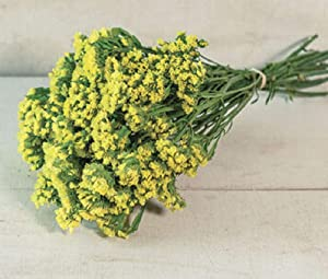 David's Garden Seeds Flower Statice Yellow 3162 (Yellow) 100 Non-GMO, Open Pollinated Seeds