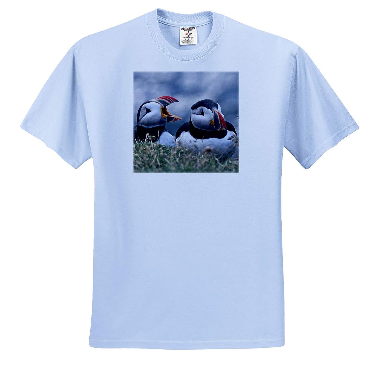 Breidavik Puffins Iceland ts/_313671 Adult T-Shirt XL Puffins 3dRose Danita Delimont