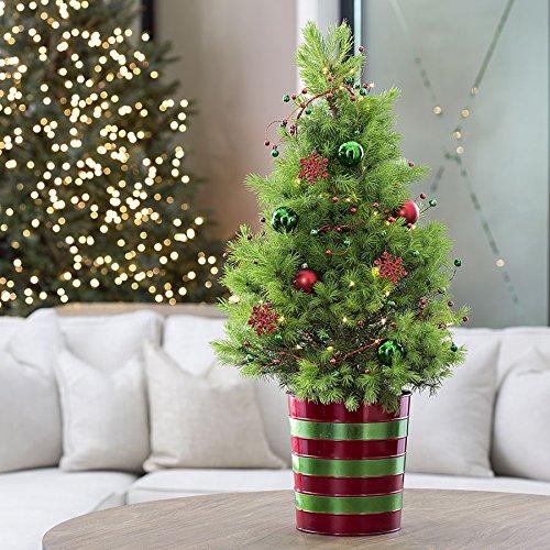 Jackson & Perkins Magical Christmas Tree - Live Miniature Christmas Tree (Christmas Live Trees)