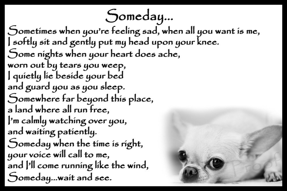 Chihuahua Dog pet loss bereavement gift Flexible Fridge Magnet Memorial - Someday CountryStyle Photography