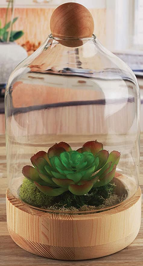 Amazon Com Circleware Terraria Wood And Glass Terrarium 2 Piece