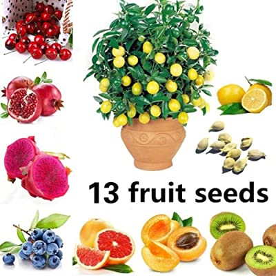 Gilroy 100Pcs Fruit Seeds 13 Species Fig Apple Orange Blueberry Kiwi Lemon Bonsai Plant for Home/Garden/Outdoor/Yard/Farm Planting : Garden & Outdoor