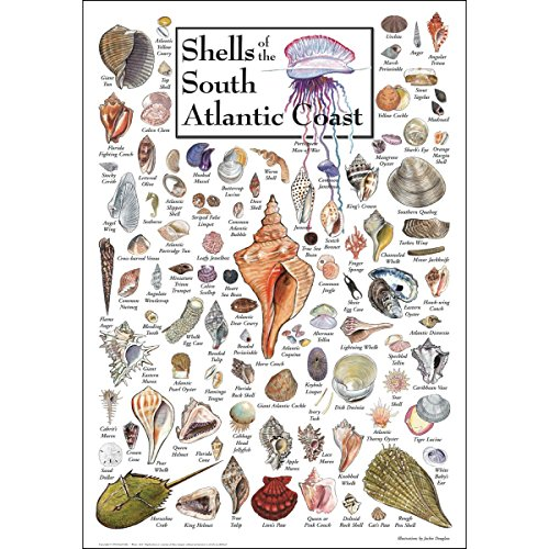 Earth Sky & Water Poster - Shells of the South Atlantic Coast