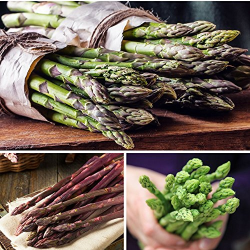 California Asparagus (Asparagus Harvest Collection - 30 Crowns - Extra High Yield & Sweet | Ships from Easy to Grow)