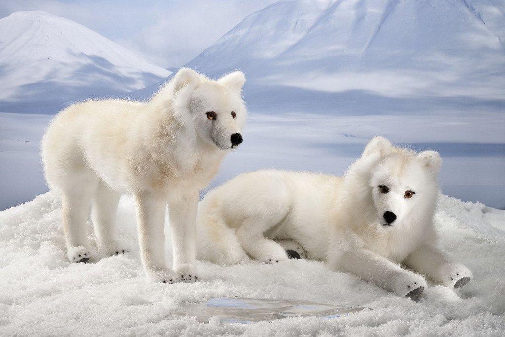 ホッキョクオオカミ 立ち KOSEN(ケーセン社) 43cm Arctic Wolf Standing/ぬいぐるみ   B003C0IYNA
