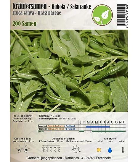 Semillas de hierbas - Rúcula / Ensalada rábano picante - Eruca sativa - Brassicaceae 200 semillas