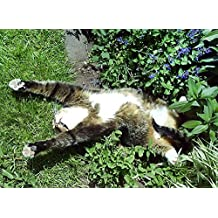 100+ ORGANIC Catnip Catmint Seeds Heirloom NON-GMO Herb Healthy USA Meow!