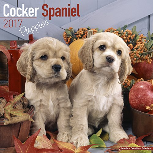 Cocker Spaniel Puppies Calendar 2017 - Dog Breed Calendars - 2016 - 2017 wall calendars - 16 Month by Avonside (Cocker Spaniel Calendar)