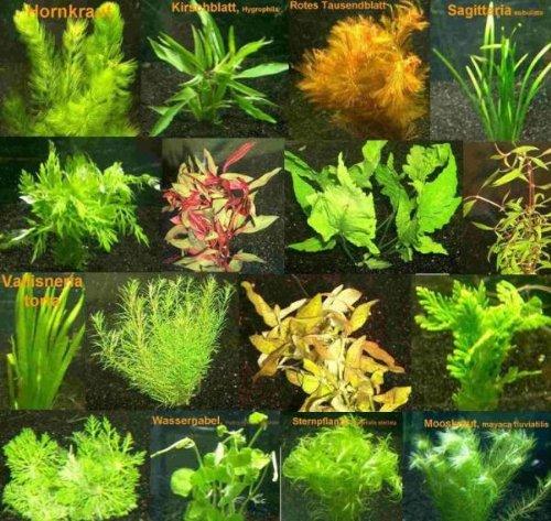 9 Bunde mit über 60 Aquarium-Pflanzen + Dünger - Farbiges Sortiment für 60-100 Liter Aquarien, Wasserpflanzen für Alle Aquarienbereiche Mühlan