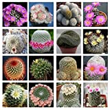 10 Mammillaria mix seedsEasy grow Care free Cactus?succulent CombSH C32
