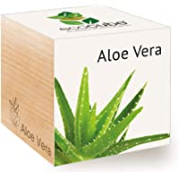 Feel Green Ecocube Aloe Vera, Nachhaltige Geschenkidee (100% Eco Friendly), Grow Your Own/Anzuchtset, Pflanzen Im Holzwürfel, Made in Austria