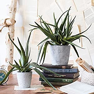 G Home Collection Rustic Artificial Aloe Vera Potted Plant 14