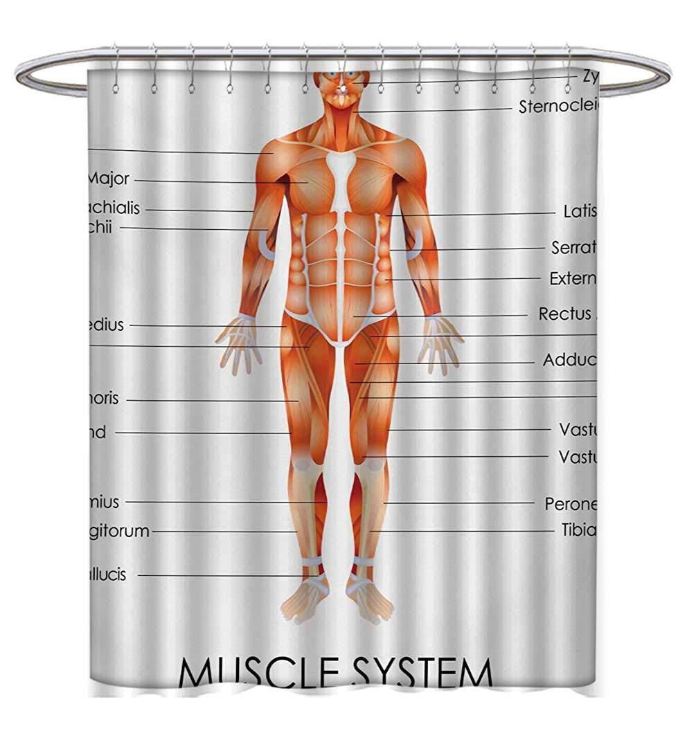 Amazon Human Anatomy Shower Curtains Sets Bathroom Muscle