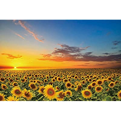 Jigsaw Puzzle 1000 Pieces for Kids Adults, Landscape Jigsaw Puzzle Game for Family Educational Toys (Colorful-Sunflower): Toys & Games