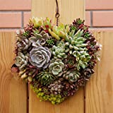 Wall Flower Container,Innovative Heart Shaped Handmade Flowerpot Succulent Plants Pot Flowers Pot Gift- Great For Succulent Plants, Air Plant, Mini Cactus, Faux Plants and More