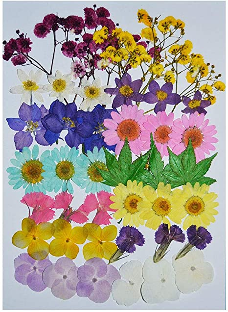 Uokwiwi Real Dried Pressed Flowers Assorted Colorful Daisies Leaves Hydrangeas for Art Craft DIY 1 Pack Size 16