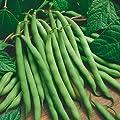 Jaysseeds™ Organic Bush Bean Provider 75 Seeds #0607 Item Upc#650348692506 Earliest to market.